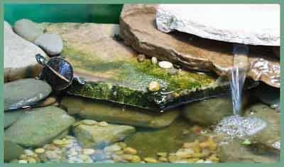 چگونه یک تراریوم برای لاکپشت بسازیم؟