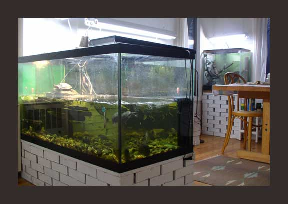 food and lettuce, various turtle pellets and surplus crickets when I ...