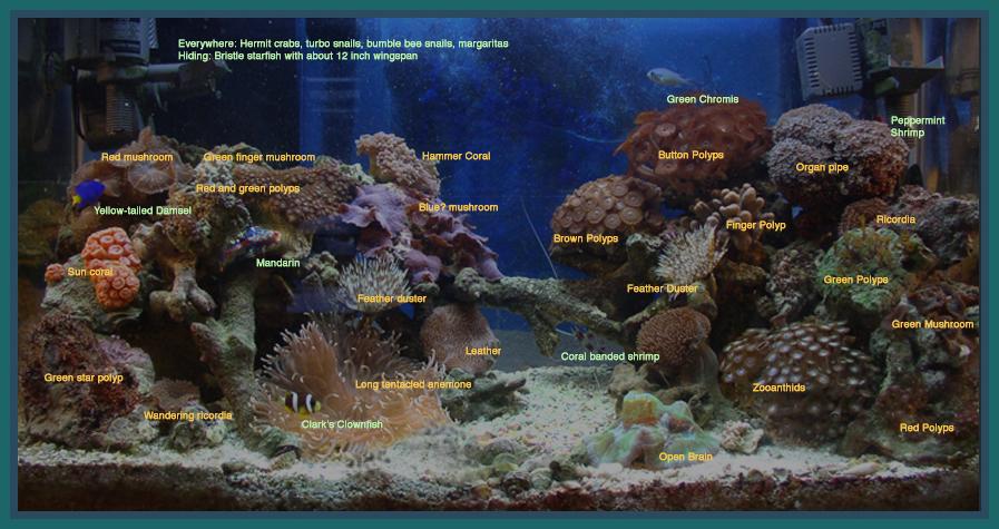 saltwater coral identification wwwpixsharkcom images