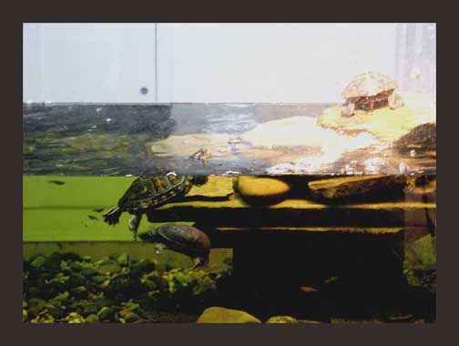 turtle fish tanks - get domain pictures - getdomainvids.com